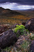 Summit Range Spring Storm and Wildflowers - Mojave Desert