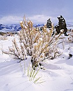 Snow Covered Tufas - Mono Lake