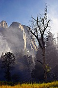 Yosemite Controlled Burn - Yosemite