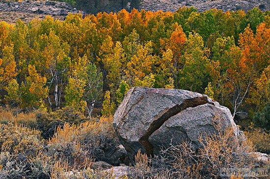 Rock Splitting Fall Color - Aspens Bishop Lakes - Eastern Sierras