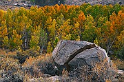 Rock Splitting Fall Color - Aspens - Bishop Lakes - Eastern Sierras