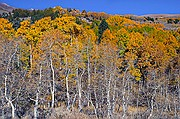 Stages of Fall Color - June Lake - Eastern Sierras