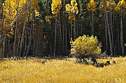 Tioga Pass Fall Colors - Lee Vining - Eastern Sierra