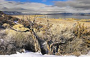 Weathered Brush Overlooking Mono Lake - Eastern Sierras