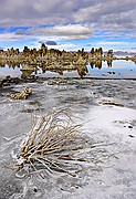 Frozen In Place - Mono Lake - Eastern Sierra Nevada Mountains