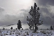 Long Valley Winter Storm - Mammoth Lakes