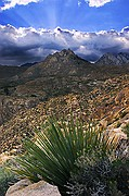 Short Canyon Yucca and God Rays - Eastern Sierra Nevada Mountains