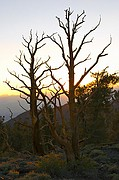 Sunset over the Bristlecones - White Mountains